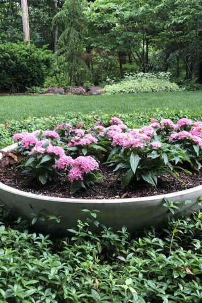 deer resistant flowers, flower pot ideas