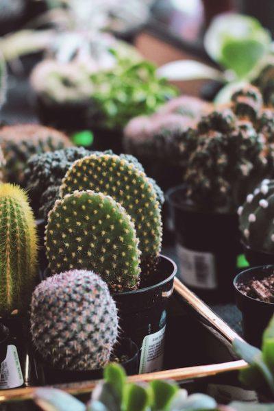 plant succulent garden