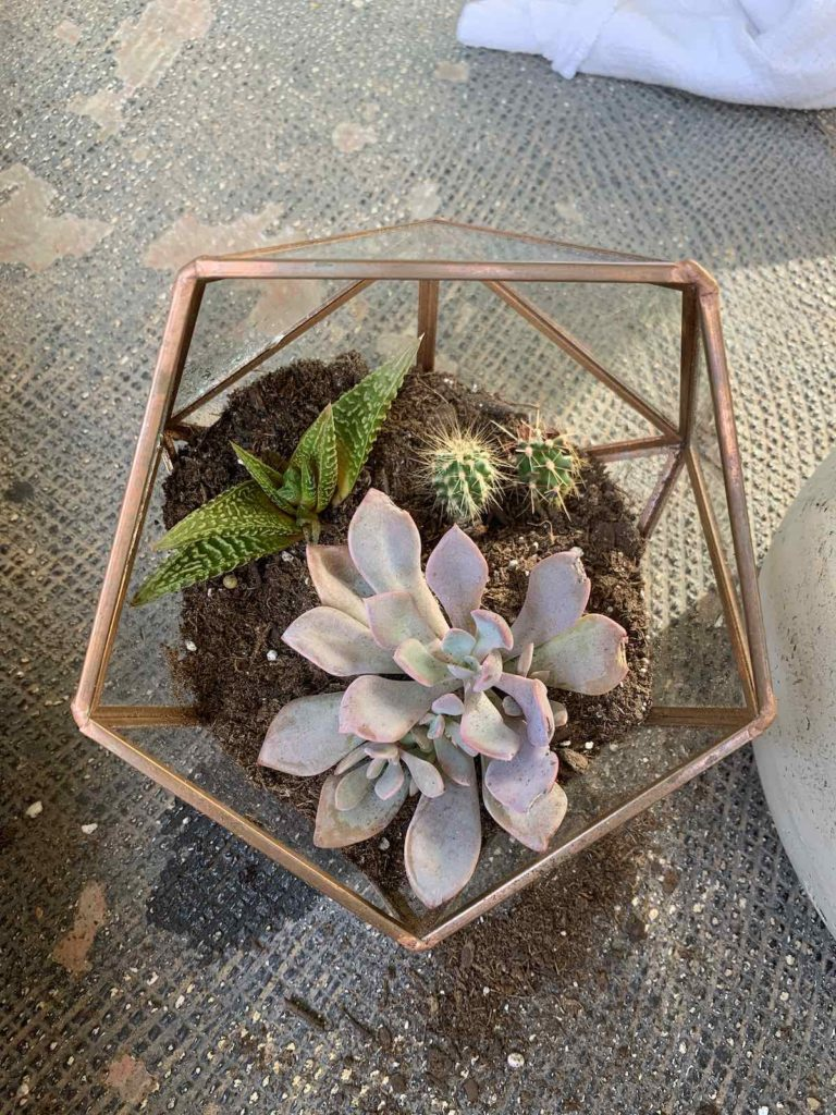 glass succulent container planting