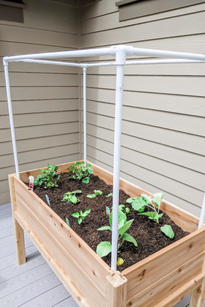 Small Completed Space Vegetable Garden