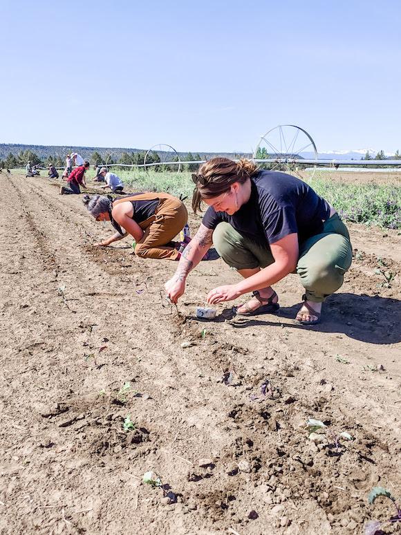 Helping on a Farm
