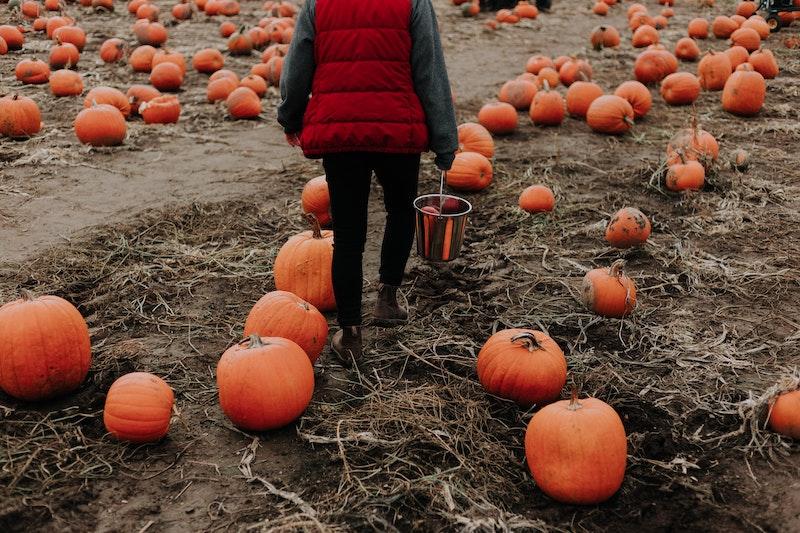 a woman enjoying a fall activity of walking through a pumpkin patch and choosing a pumpkin