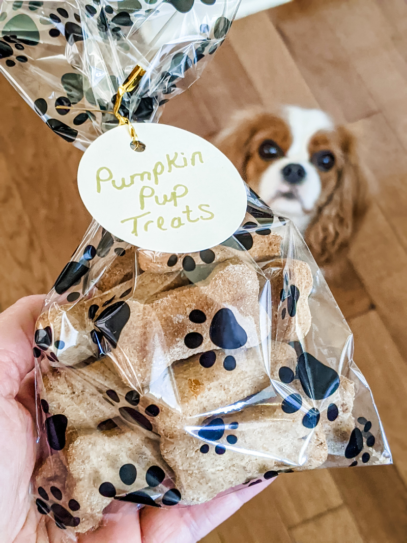 A clear bag printed with paw prints containing the Homemade Pumpkin Dog Biscuits with Marie's cocker spaniel looking up at it.