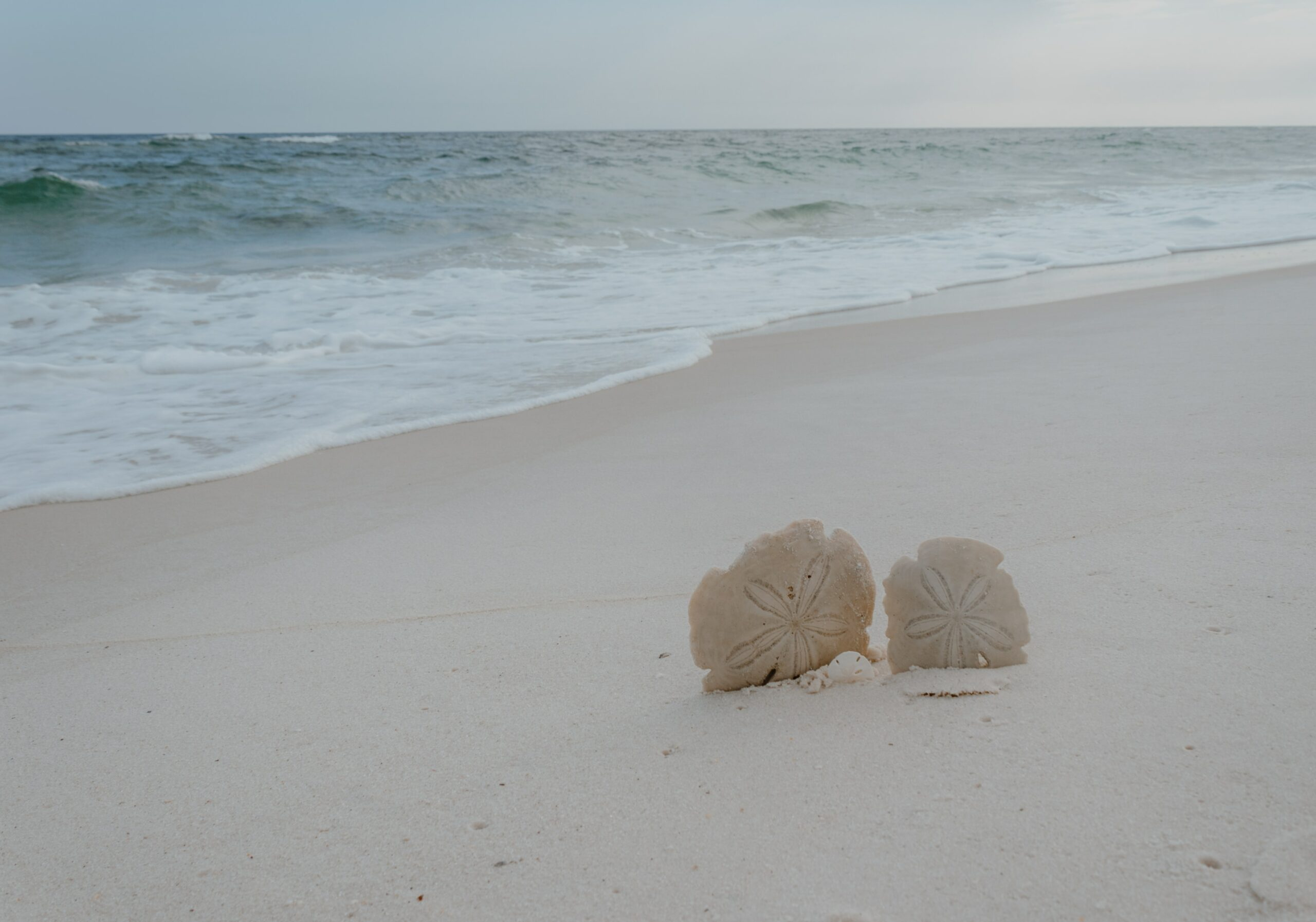 As part of Marie's story regarding a different resolution, two sand dollars stick out of the sand in front of a shoreline