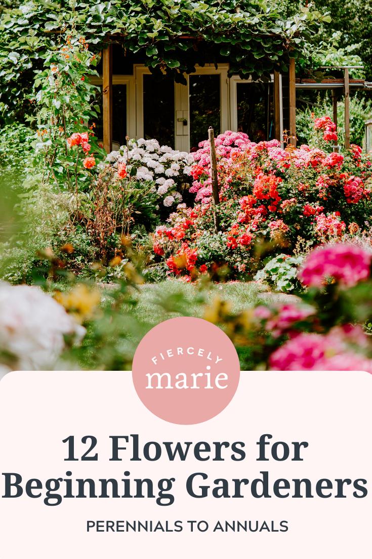 12 Flowers for Beginning Gardeners