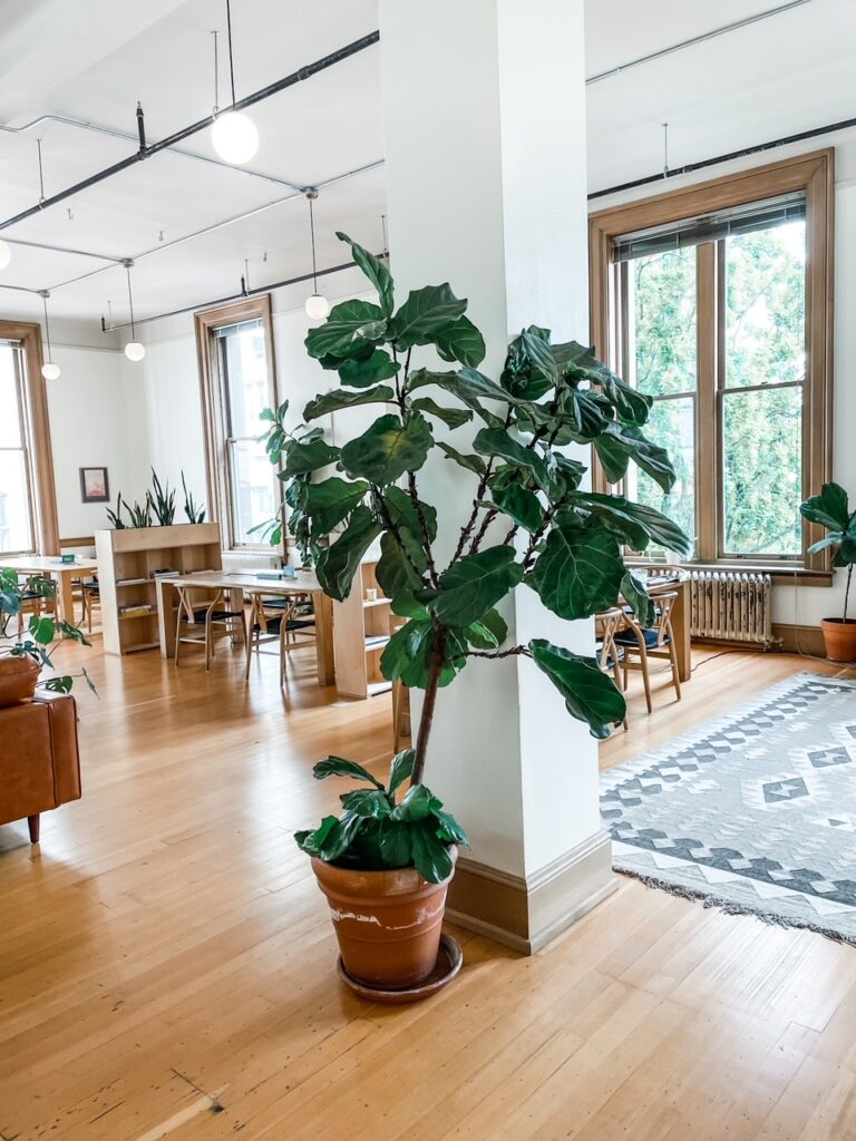 A view of Marie's coworking space with plants, rugs, large windows and plenty of light